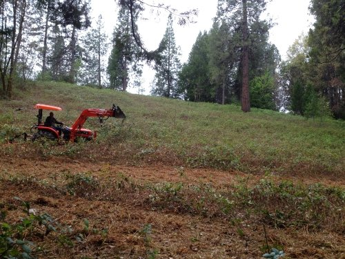 Clearing blackberries from Nevada County land